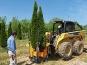 Masini de transplantat arbori Optimal